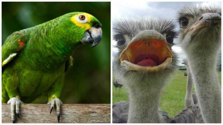 Jornal Campeão: Arzila e Condeixa: GNR apreendeu papagaio e avestruzes