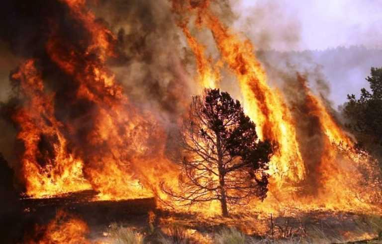 Jornal Campeão: Região de Coimbra tem projecto de 1,3 milhões para travar fogos