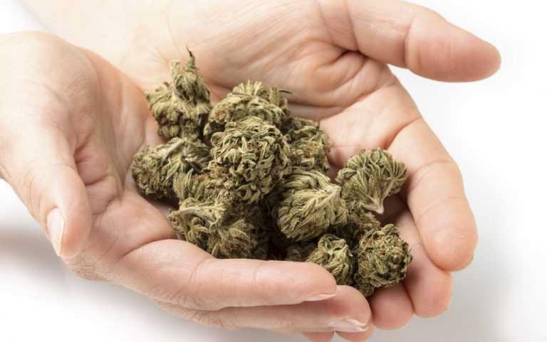 Jornal Campeão: Oliveira do Hospital: Encontrou cannabis na apanha de cogumelos