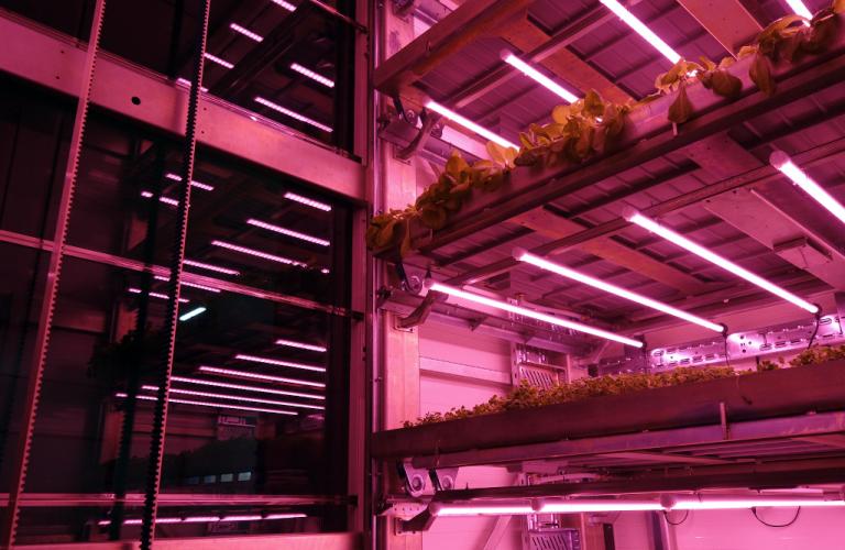 Jornal Campeão: Empresa de Coimbra cria solução inovadora para cultivo de plantas