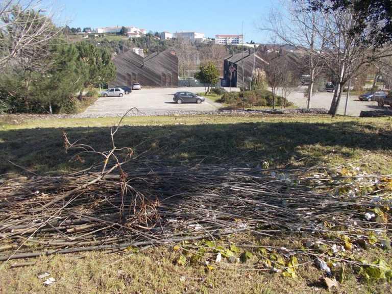 Jornal Campeão: Coimbra: CDU alerta para abate de árvores