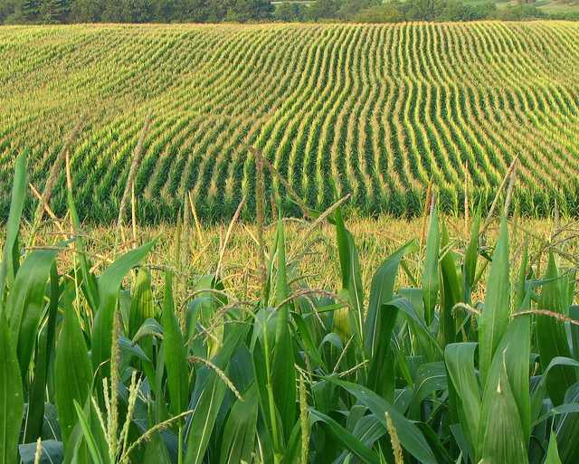 Jornal Campeão: Baixo Mondego: Ajudas à produção agrícola vão cair 30 por cento