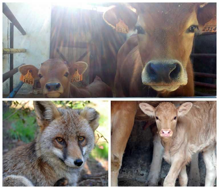 Jornal Campeão: Parque Biológico da ADFP regista vários nascimentos