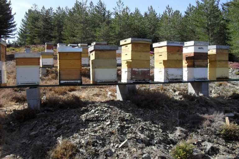 Jornal Campeão: Serra da Lousã: Milhares de colmeias queimadas e mel em risco