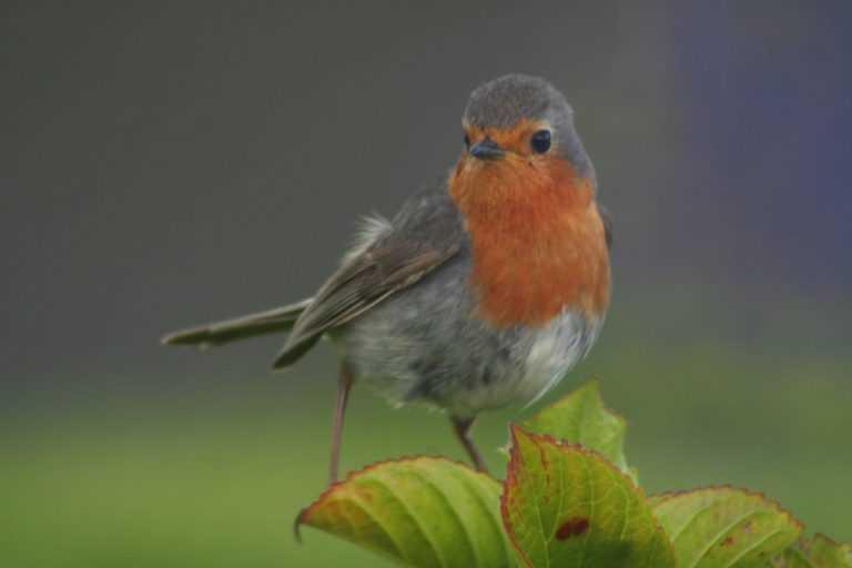 Jornal Campeão: Montemor-o-Velho desenvolve projecto de observação de aves no Paul do Taipal