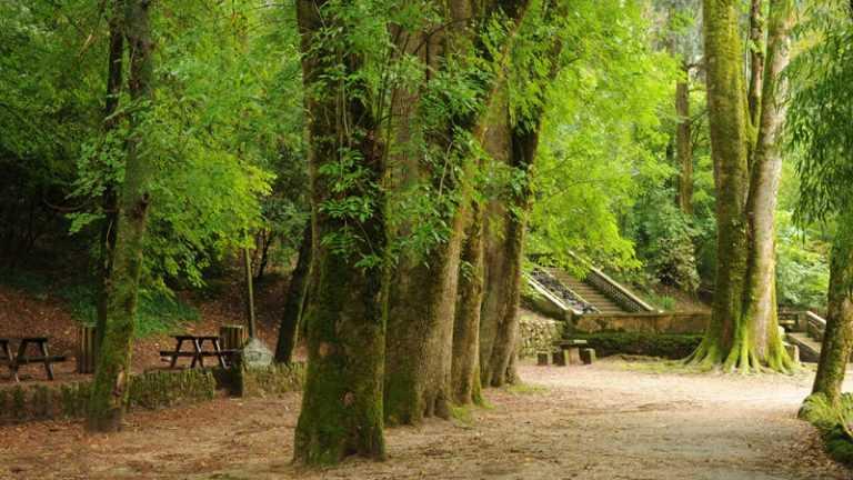 Jornal Campeão: Bussaco: Interesse público para quatro bosques e 26 árvores