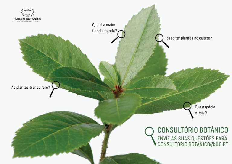 Jornal Campeão: UC: Jardim Botânico abre consultório sobre as plantas