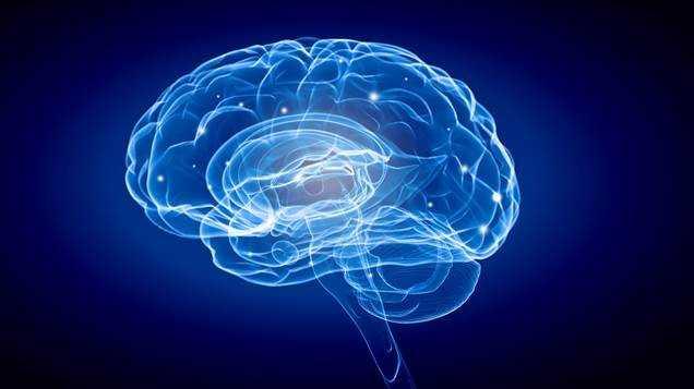 Jornal Campeão: CNC e iCBR associam-se à Semana Internacional do Cérebro, mas em formato digital