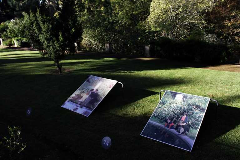 Jornal Campeão: Projecto de fotografia do Jardim Botânico na final de prémio mundial