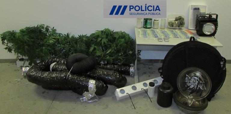 Jornal Campeão: PSP deteve três pessoas por tráfico e cultivo de estupefacientes