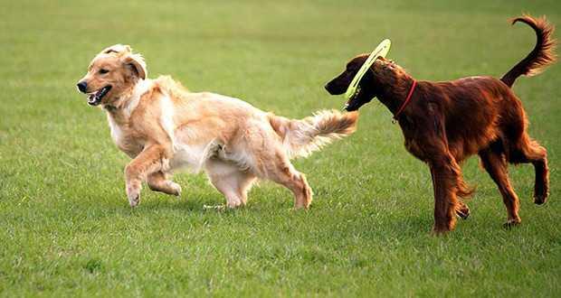 Jornal Campeão: Aveiro avança com parques recreativos para cães