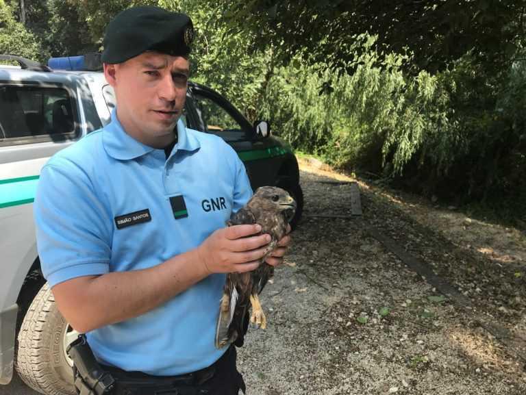 Jornal Campeão: Coimbra: GNR recolheu milhafre e abutre na auto-estrada