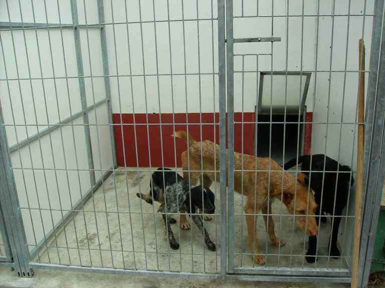 Jornal Campeão: Canil de Coimbra entrega animais para adopção ao domicílio