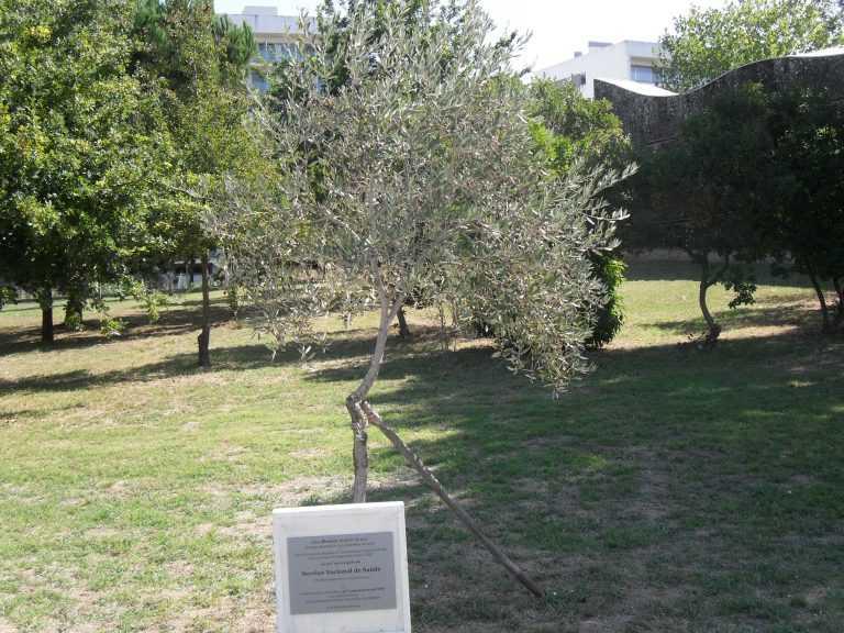 Jornal Campeão: Coimbra assinala 40 anos do Serviço Nacional de Saúde