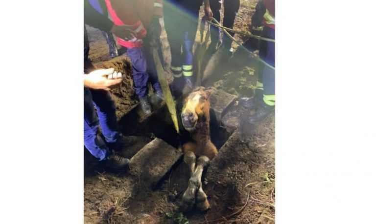 Jornal Campeão: Arcos de Valdevez: Cavalo desencarcerado de um aqueduto