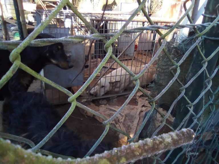 Jornal Campeão: Miranda do Corvo: Petição pública exige parque de acolhimento animal