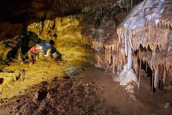 Jornal Campeão: Penela: Novo escaravelho descoberto em gruta na serra do Sicó