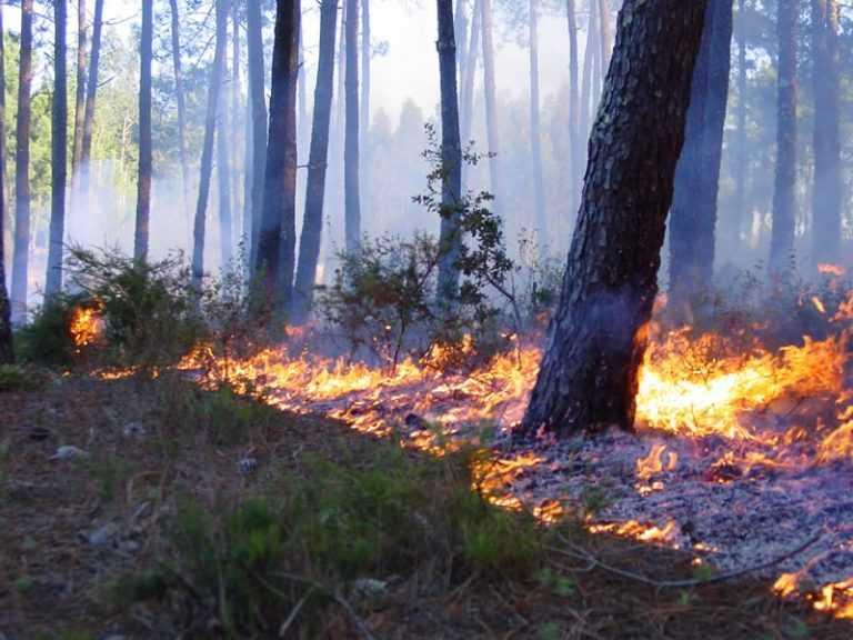 Jornal Campeão: Bombeiros estagiários do distrito de Coimbra estão preparados para os incêndios