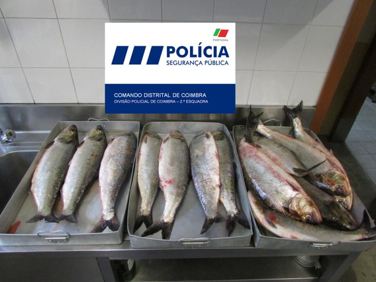 Jornal Campeão: PSP apreende peixe apanhado junto à ponte do Açude