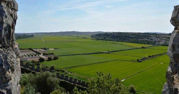 Jornal Campeão: Agricultores do Baixo Mondego exigem apoio do Estado para prejuízos de 300 000 euros