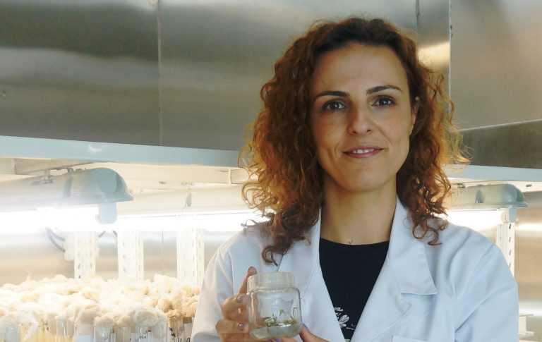 Jornal Campeão: Cientistas da FCTUC identificam proteína para clonagem de plantas