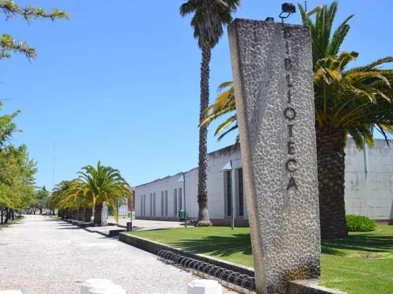 Jornal Campeão: Cantanhede: Biblioteca Municipal acolhe debate sobre apicultura