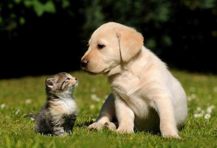 Jornal Campeão: Município de Arganil promove campanha de esterilização de cães e gatos