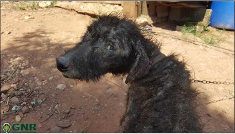Jornal Campeão: Coimbra: Casal identificado por maus tratos a um cão