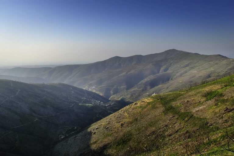Jornal Campeão: Arganil refloresta 2 000 hectares de baldios com autóctones