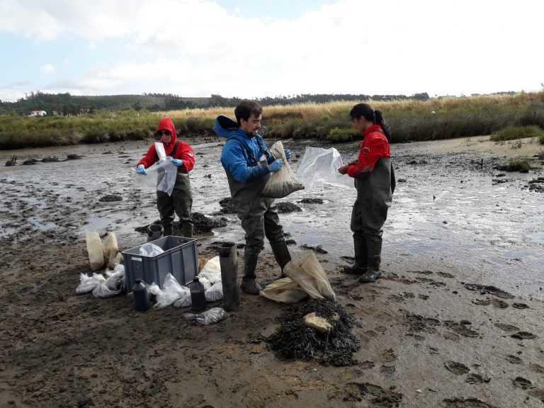 Jornal Campeão: Investigadores no combate ao desaparecimento dos sapais estuarinos