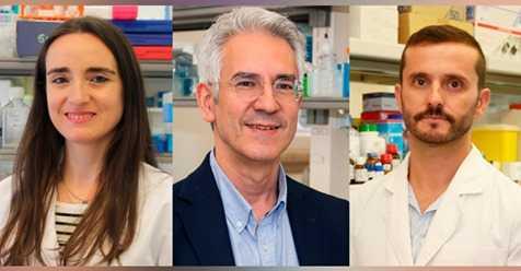 Jornal Campeão: UC: Investigadores estudam impacto do colesterol em excesso no cérebro