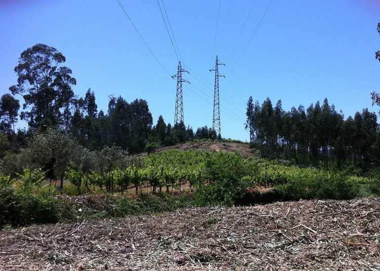 Jornal Campeão: EDP investe na renovação e criação de faixas de gestão de combustível