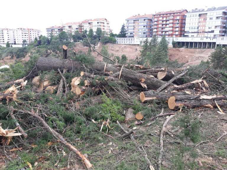 Jornal Campeão: CpC critica abate de árvores em zona verde de Coimbra