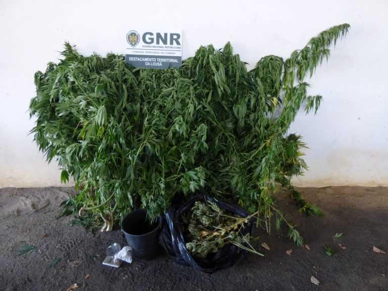 Jornal Campeão: Arganil: GNR detém duas pessoas por tráfico de estupefacientes