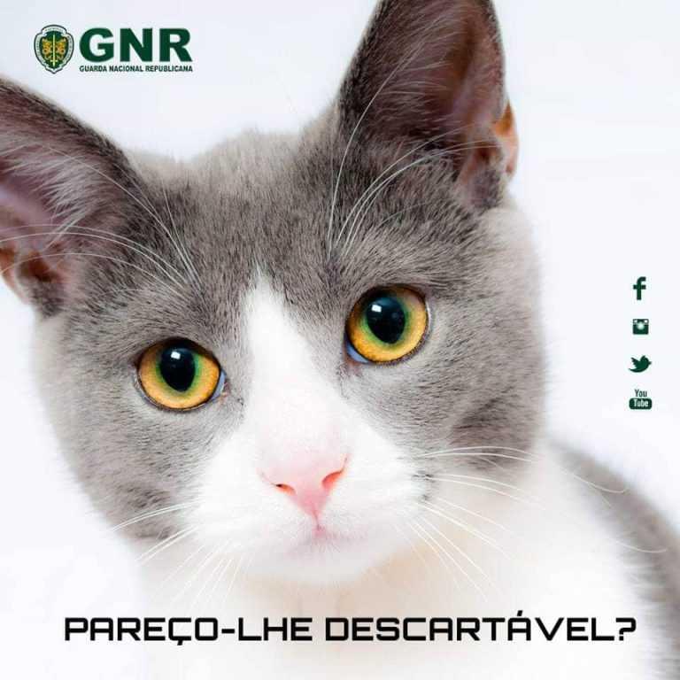 Jornal Campeão: Coimbra: Identificado por ter dado um tiro num gato