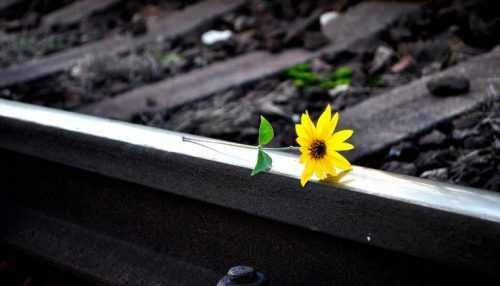 Suicídio Setembro Amarelo