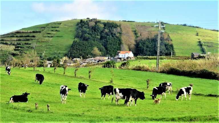 """Jornal Campeão: Agricultores """"perplexos"""" com a eliminação da carne de vaca na UC"""