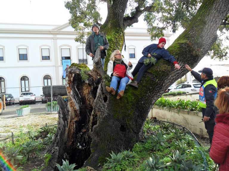 Jornal Campeão: Manifestantes impedem abate de árvore na Figueira da Foz
