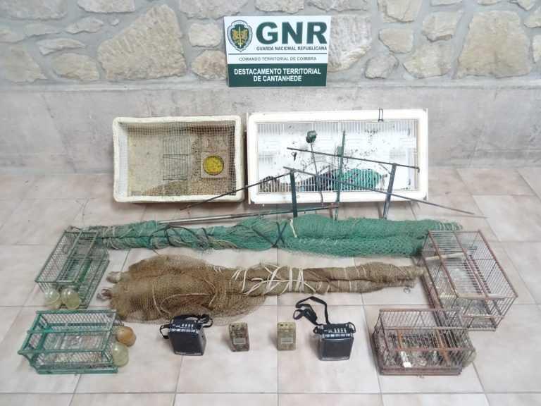 Jornal Campeão: GNR de Cantanhede apreende 38 aves capturadas ilegalmente
