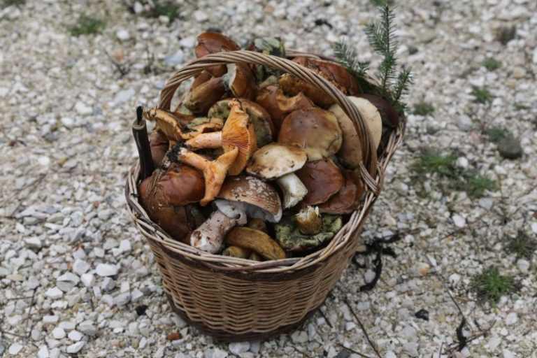 Jornal Campeão: Turistas de vários países à descoberta de cogumelos na Serra da Lousã