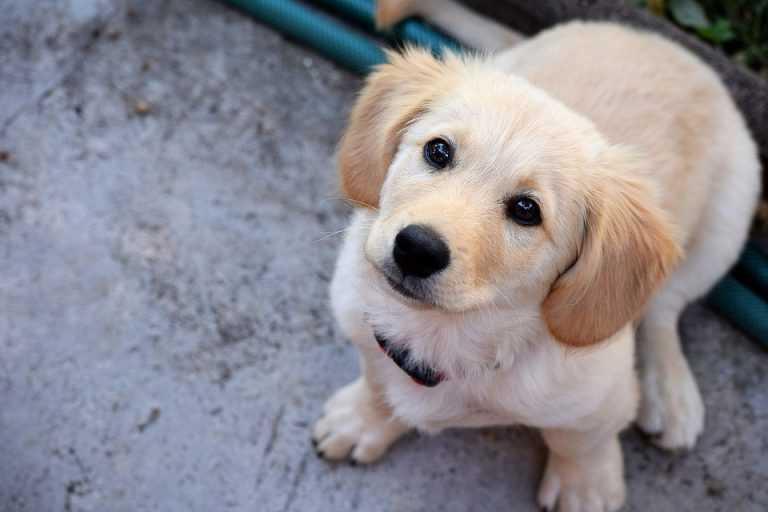 Jornal Campeão: Lousã aprova adjudicação da empreitada do Centro de Recolha Animal