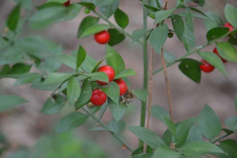 Jornal Campeão: Gillbardeira é a primeira espécie do ano no Parque Biológico da Lousã