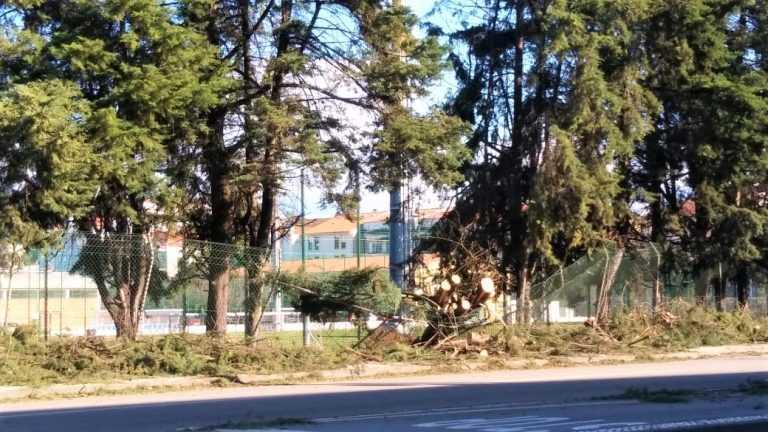 Jornal Campeão: Distrito de Coimbra em alerta amarelo regista 150 árvores caídas