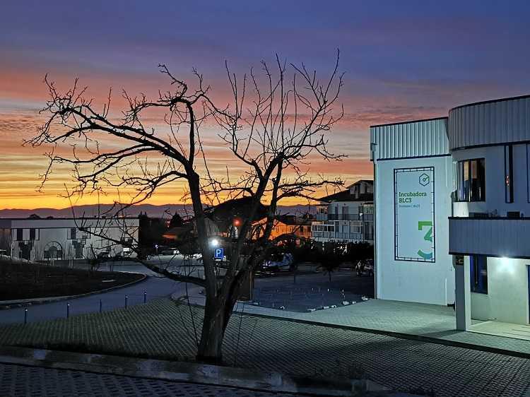 Jornal Campeão: Projecto quer produzir biocombustível com resíduos da poda de árvores