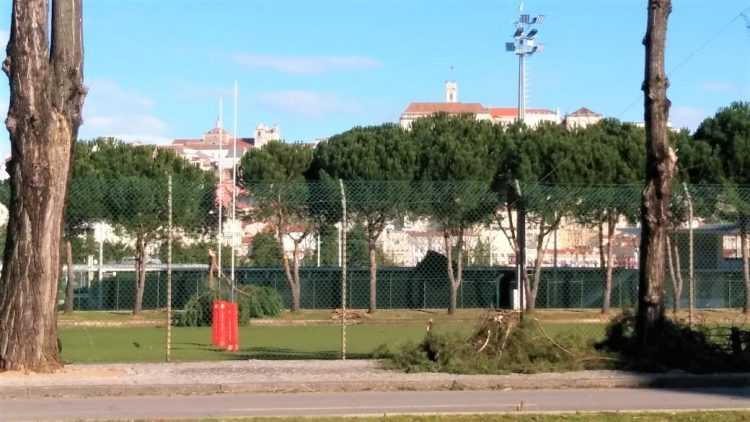 Árvore caída - Estádio Universitário - mau tempo
