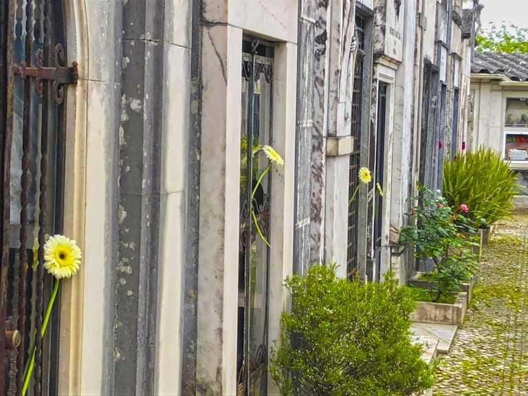 Jornal Campeão: Câmara de Coimbra colocou flores no Cemitério da Conchada