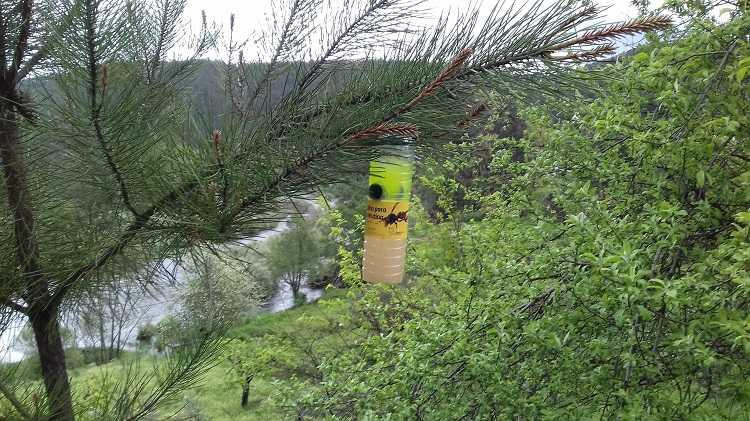Jornal Campeão: Pampilhosa da Serra continua combate à vespa asiática