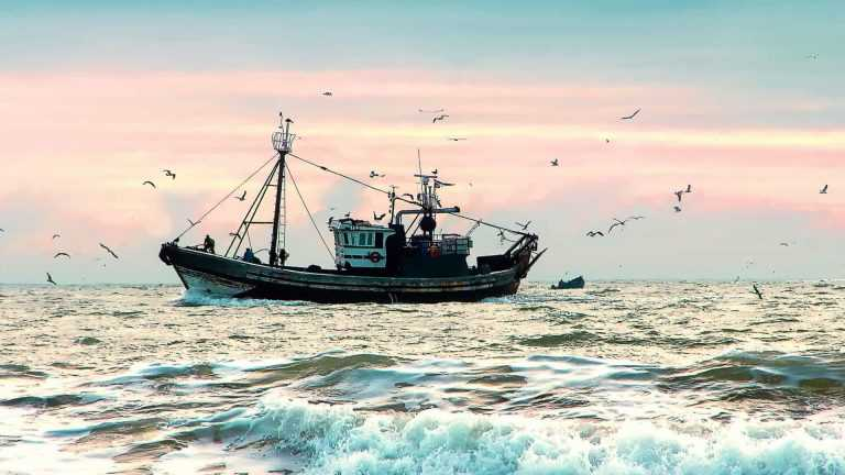 Jornal Campeão: Pescadores do Centro Litoral registam quebra de 50% do valor do peixe na lota