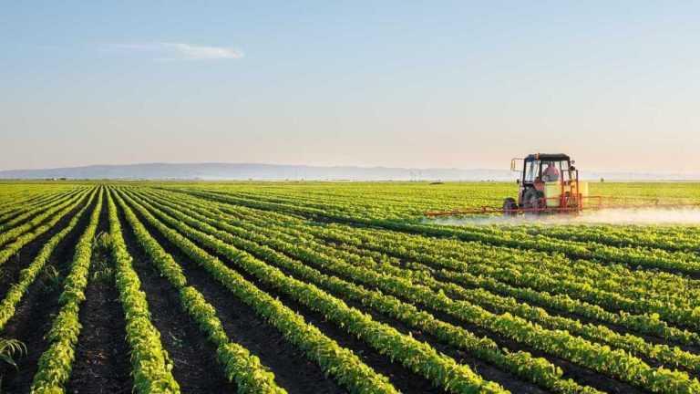 Jornal Campeão: CoimbraMaisFuturo abre candidaturas para financiamento da agricultura