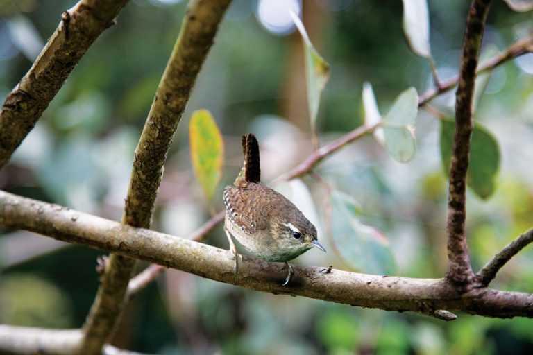 Jornal Campeão: Navigator instala caixas-ninho para aves florestais nidificarem